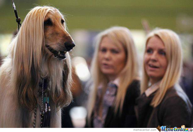 long-hair-dog_o_1951057
